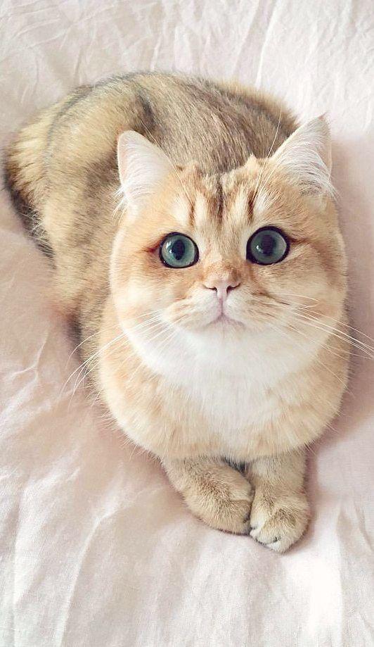 Remarkable Beautiful Cats For Sale In Lahore Great Con Imagenes Gatos Bonitos Gatos Perros Y Gatos Tiernos