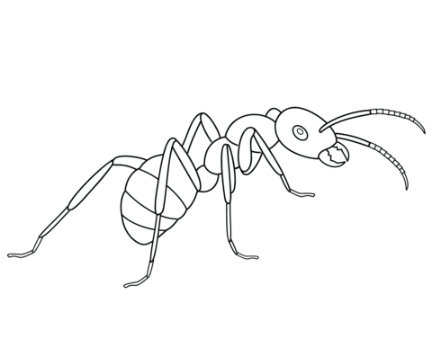 Ant Coloring Page From Ants Category Select 20946 Printable