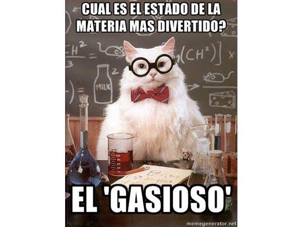 memes de Gatos