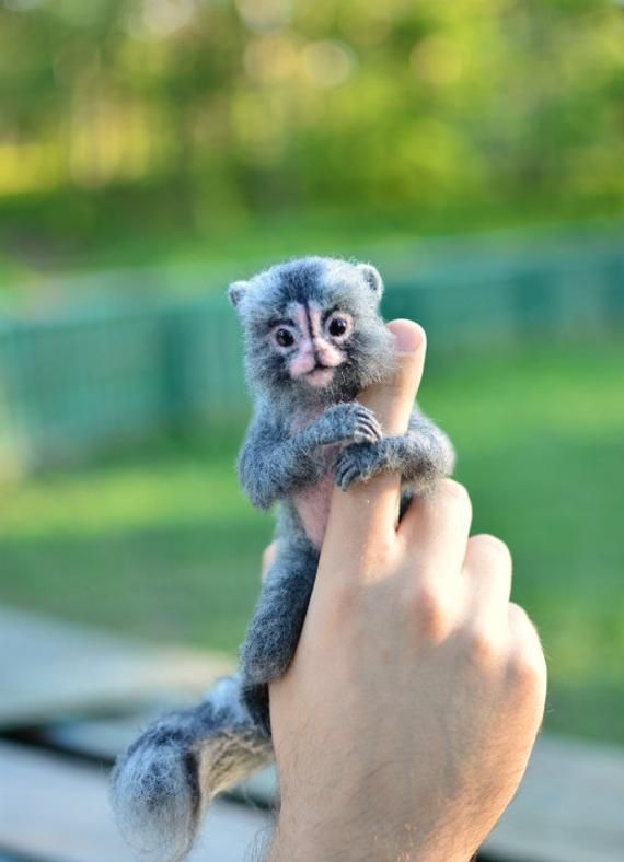 MADE TO ORDER Felted Marmoset Marmoset Affe MiniaturAffe