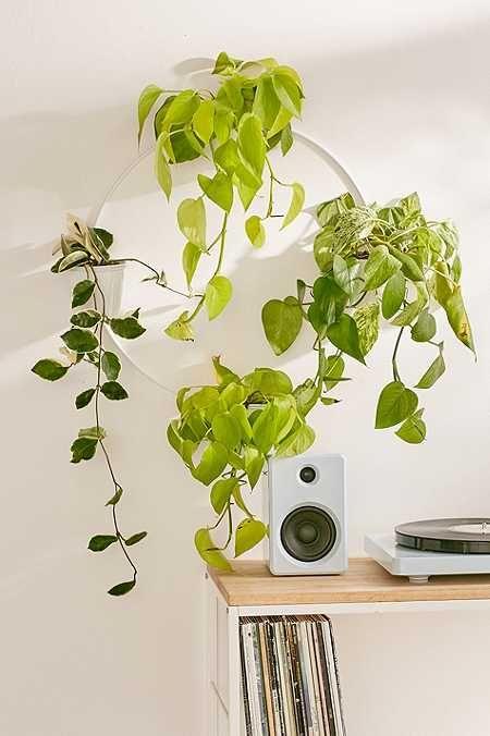 wandhalterung f r mehrere pflanzen my room berlin pinterest pflanzen wandhalterung und w nde. Black Bedroom Furniture Sets. Home Design Ideas