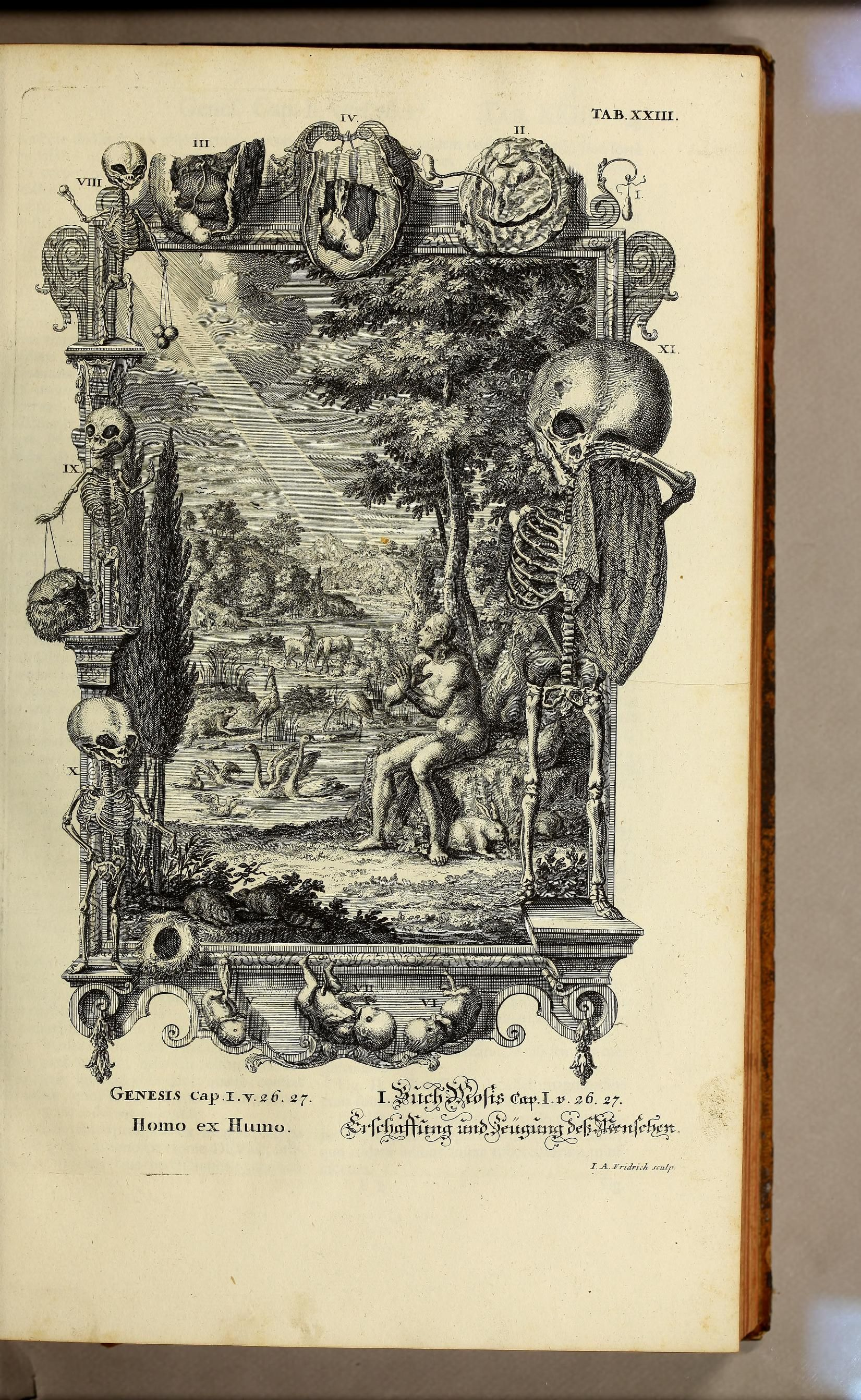 Illustration found in Physica sacra. | Natural history published ...