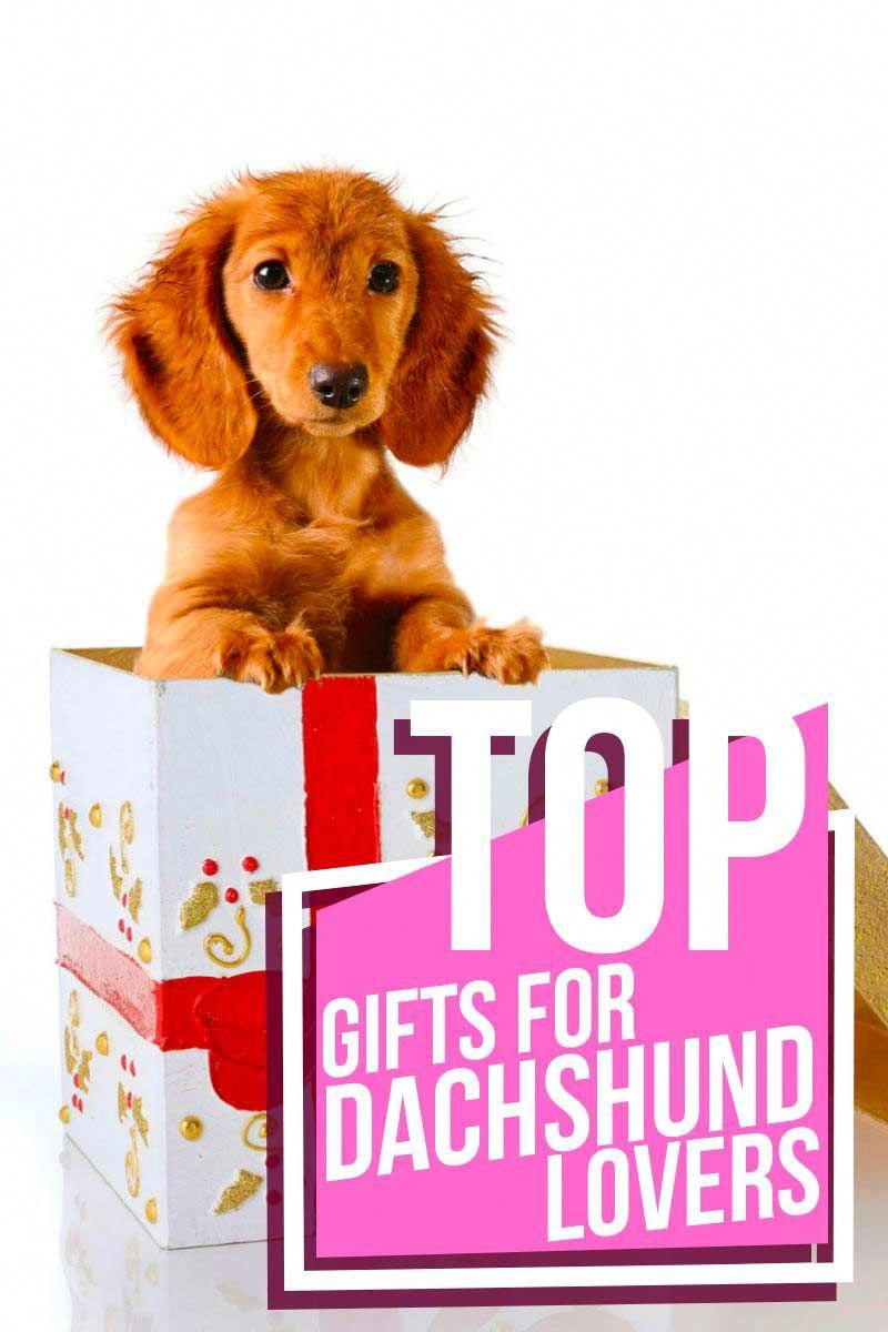 Top Gifts For Dachshund Lovers Product Reviews From The Happy