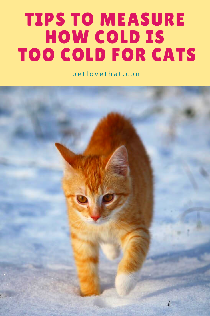 The Season Is Changing And The Temperature Is Getting Colder Just Like You Or Your Kids Feel The Biting Cold Your Cats Also Fee Cats Pets Cats Cat Questions