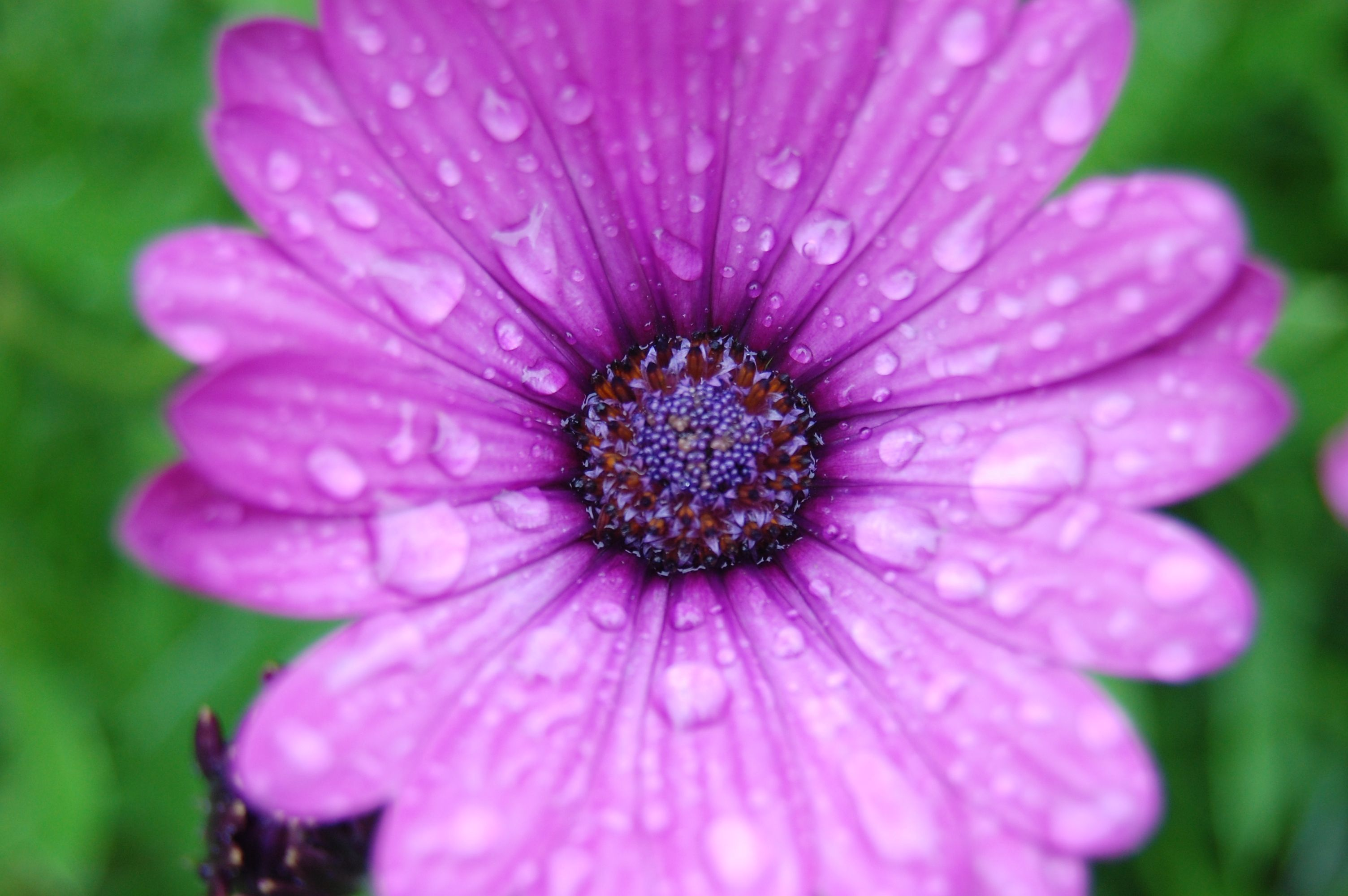 Pretty Purple Flower Quotes Photography Pinterest