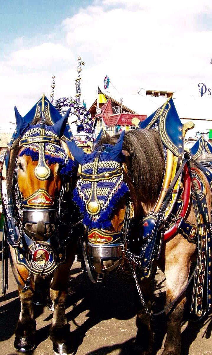 Paulaner beer wagon horses at Oktoberfest - Munich