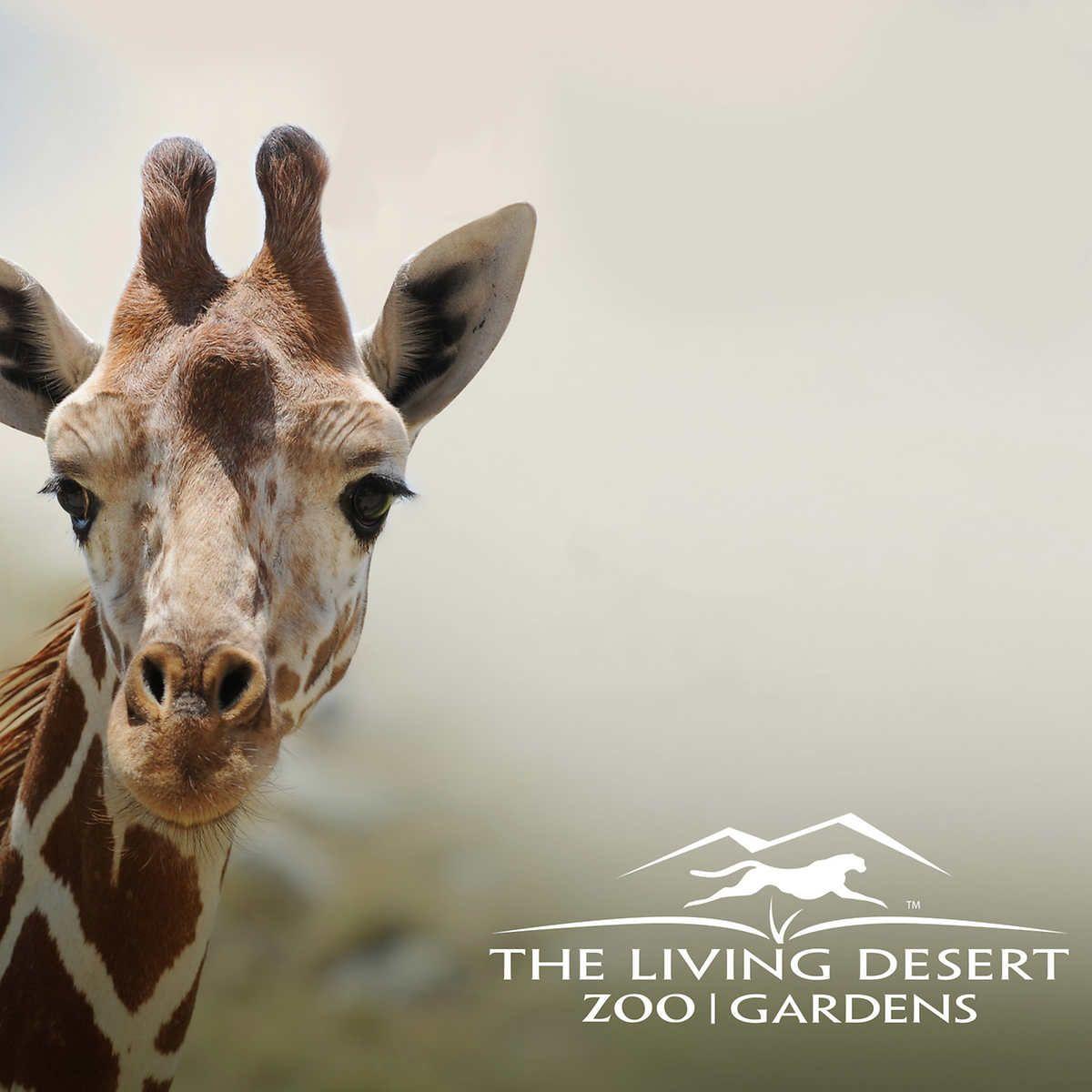 ad71c4b6289f8cf7c6dcd409121fe555 - The Living Desert Zoo And Gardens Tickets