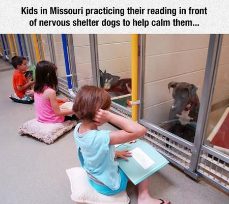 Kids In Missouri Practicing Their Reading With Shelter Dogs Shelter Dogs Kids Reading Funny Animals