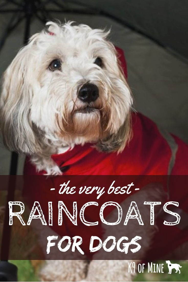 8 Best Dog Raincoats Keeping Your Pooch Dry In Downpours Dog Raincoat Dogs Raincoat