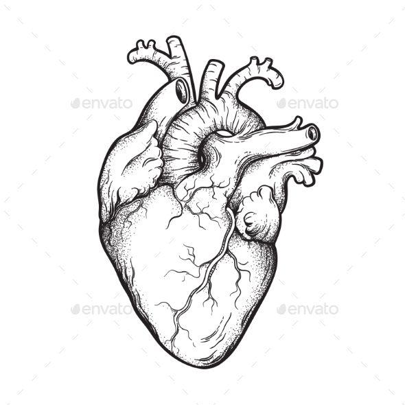 Photo of Human Heart Line Art and Dotwork #Heart, #Human, #Line, #Dotwork