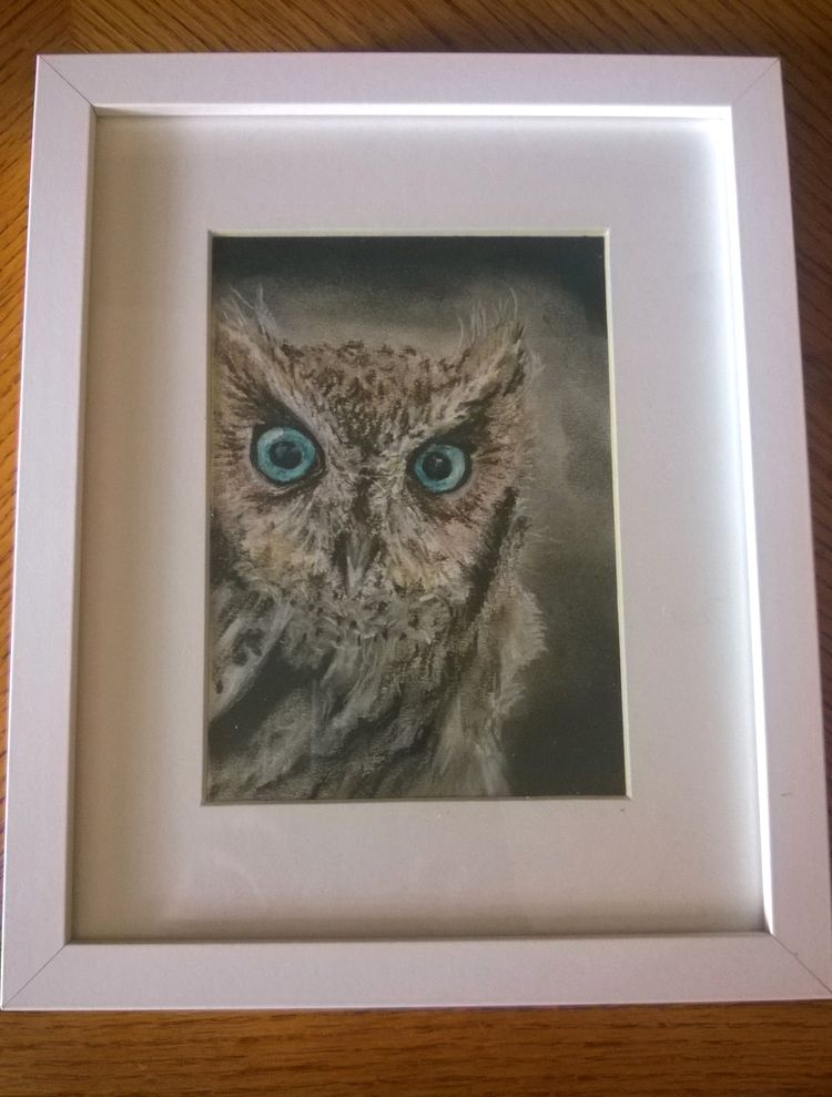 Wise Guy, little owl, chalk pastel.