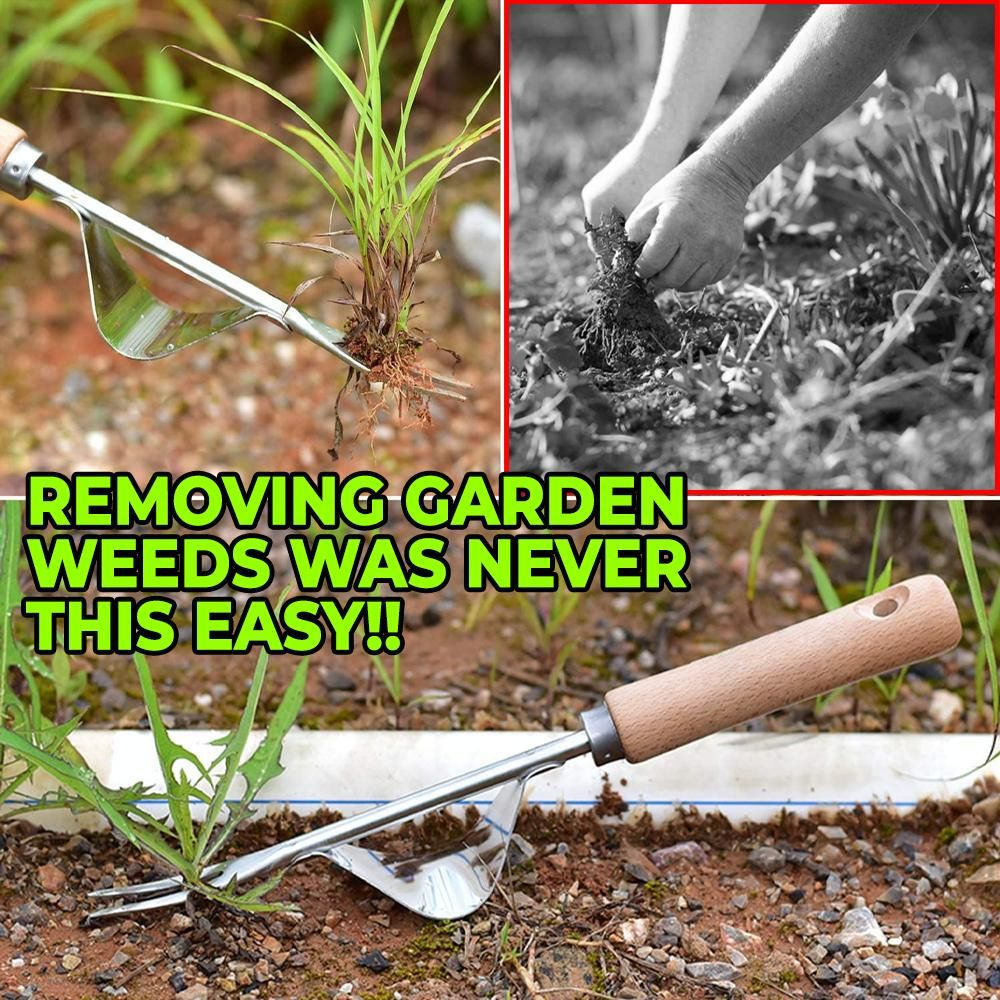 🌿 You certainly need this Stainless Steel Gardening Weeder if you want a beautiful weed-free garden. It is your ideal garden helper to eliminate stubborn weeds. It is quick, easy, practical, interesting, fun, and labor-saving.