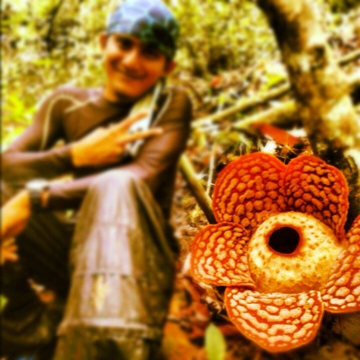 Rafflesia In 2020 Large Flowers Flowers Species