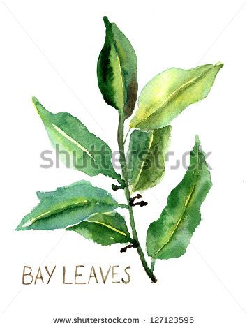 Watercolor Leaves Stock Photos, Images, & Pictures | Shutterstock