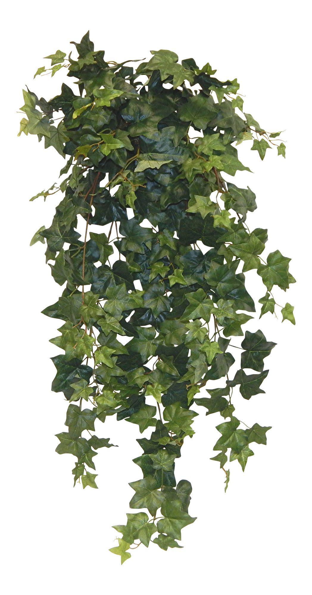 Ivy Hanging Plant