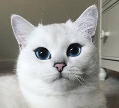 Resultado de imagen de cat