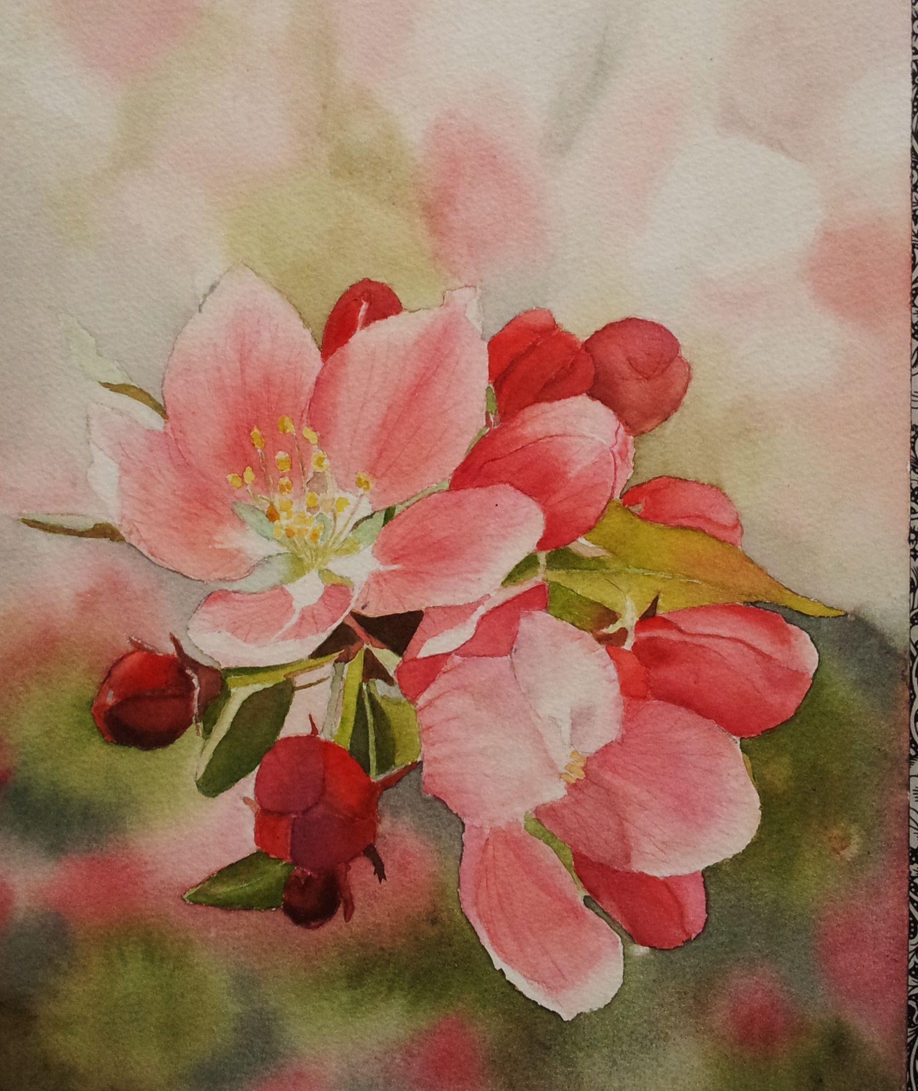 Fleurs de Pommier - Aquarelle