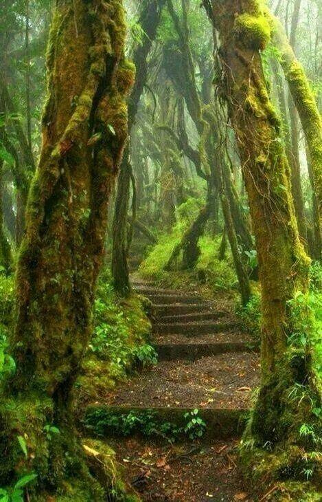 Majestosas árvores guardam o caminho...