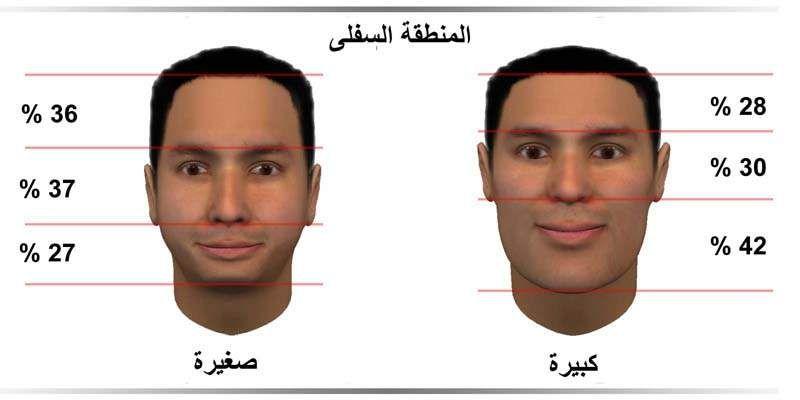 نسب الوجه و مناطق أولويات الحياة الثلاث مدونة أسرار الوجه Face Reading Zone 1 Reading