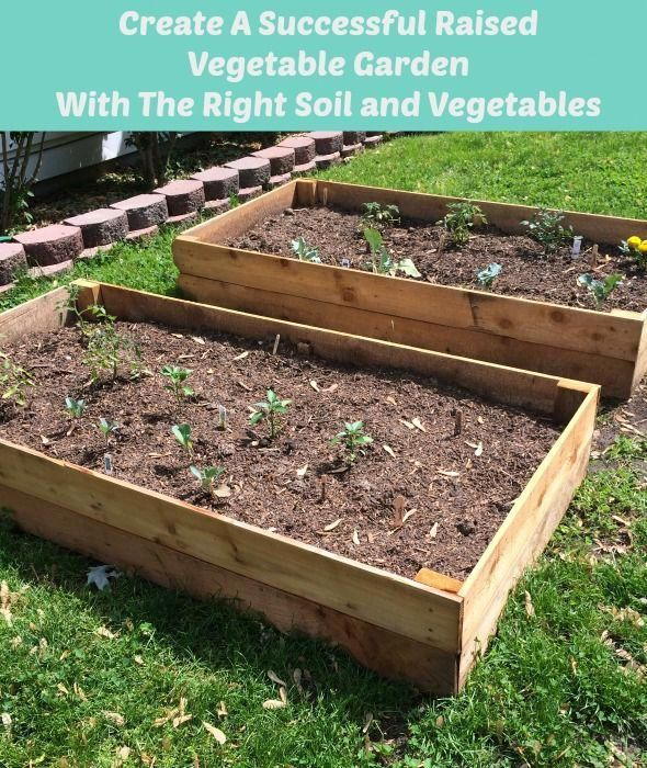 Create A Successful Raised Vegetable Garden With The Right
