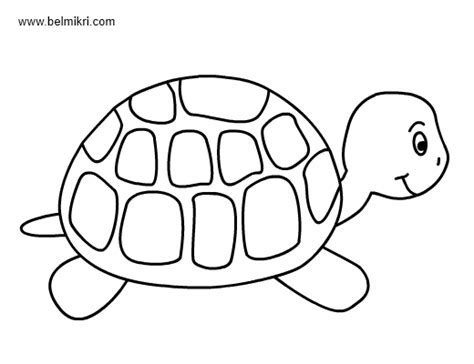 free printable turtle templates  bing images  coloring pages animal coloring pages