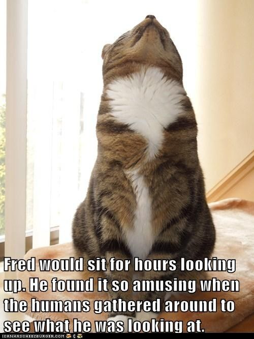 Most Cats Look Down At You Questioning Your Intelligence Not
