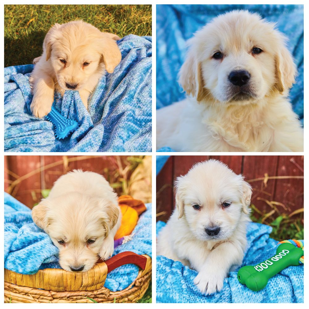These Adorable Little Puppies Are Hoping To Find Their Forever Home
