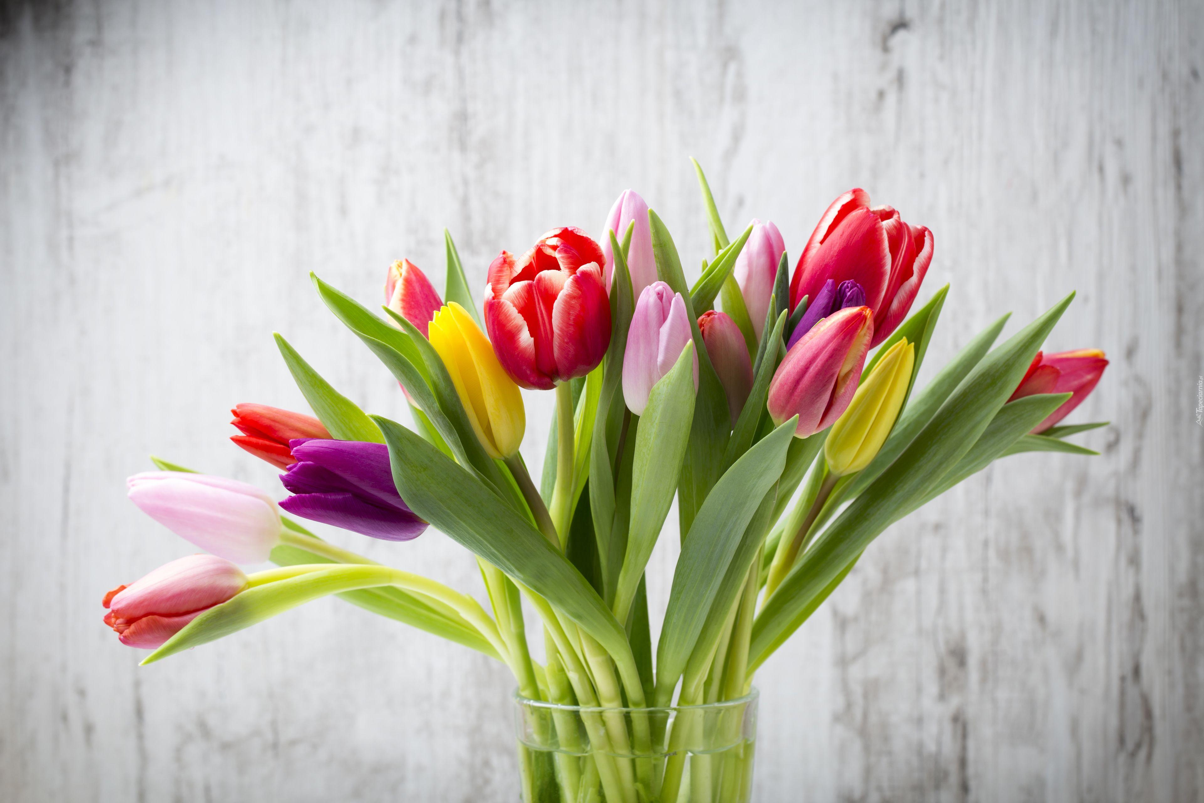 Kwiaty Tulipany Bukiet Wazon Duvar Kagidi Duvar