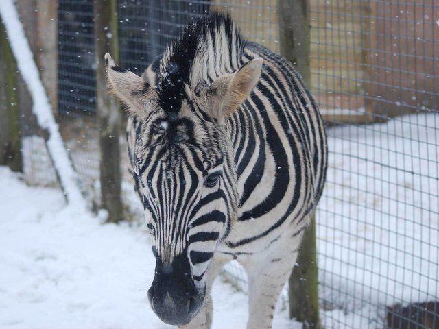 Animals in Snow Quiz