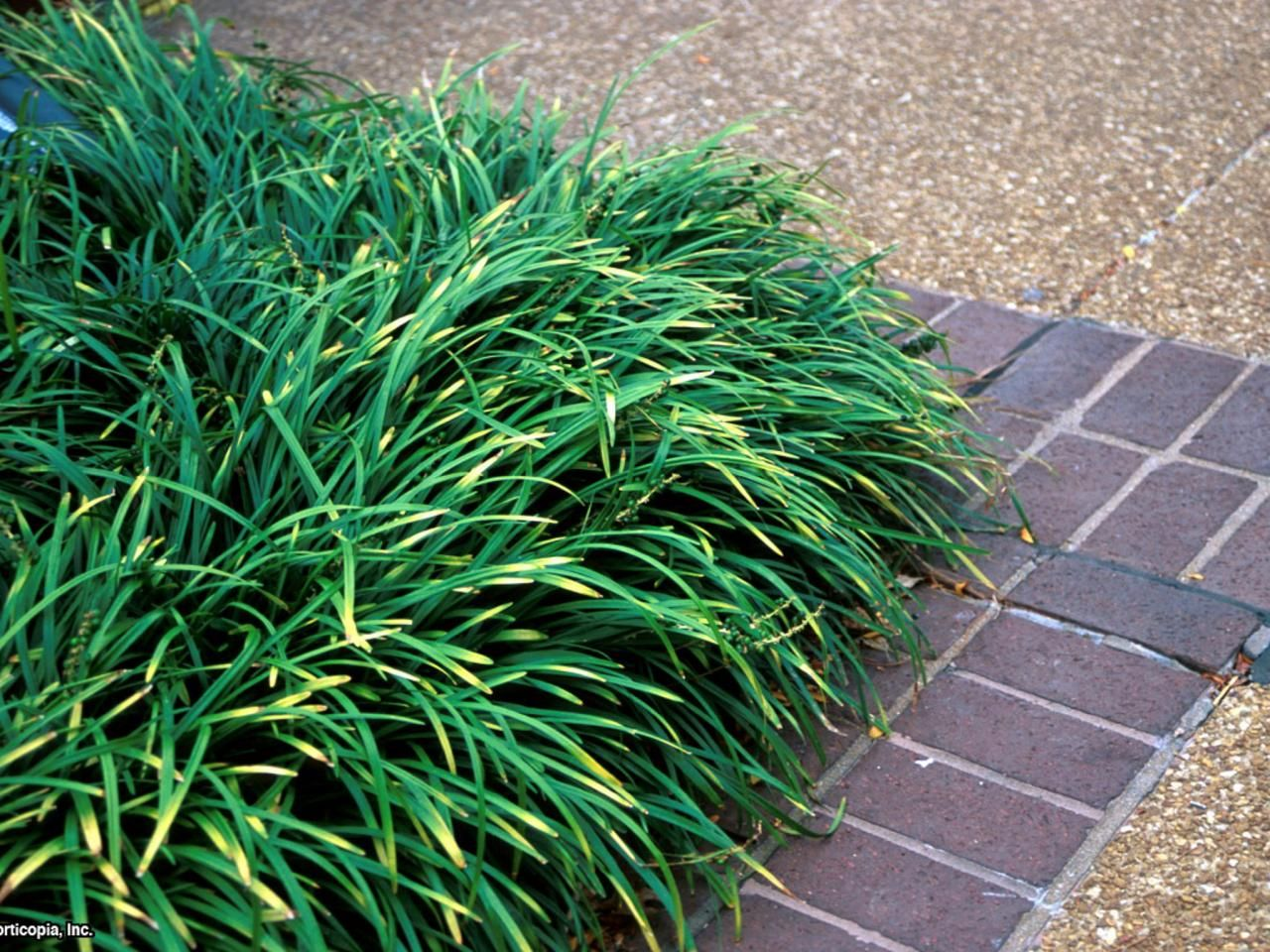 Which Plants to Use as Lawn Alternative | Lawn care, Landscape ...