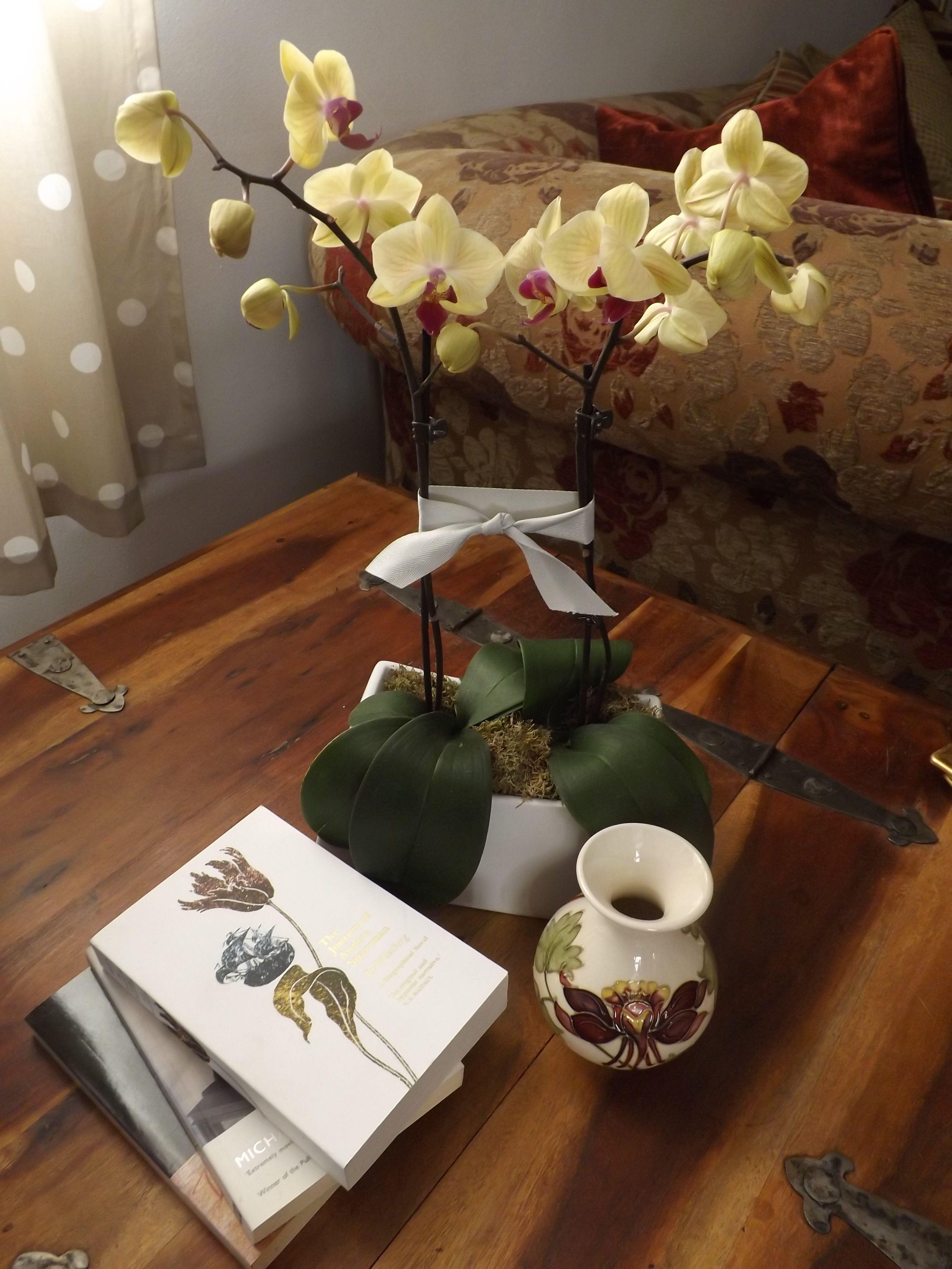 A Peaceful Corner The Lotus Flower Book Club Pinterest Lotus