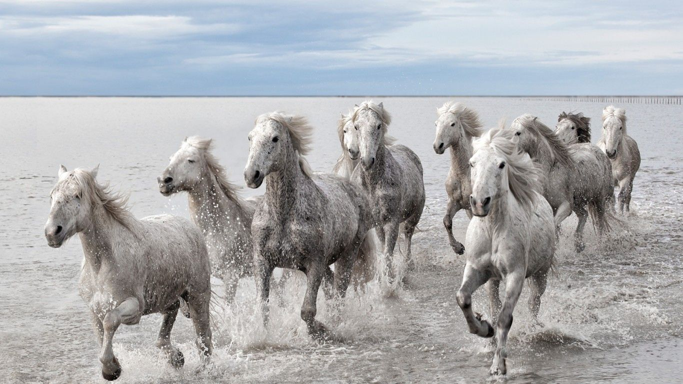 Digital Fantasy Horse On Beach Seven Horses Wallpaper Hd Free Wallpapers Free Horses Camargue Horse Wild Horse Pictures