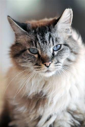 Adopt From Our Sanctuary Animals Animal Sanctuary Cat Adoption