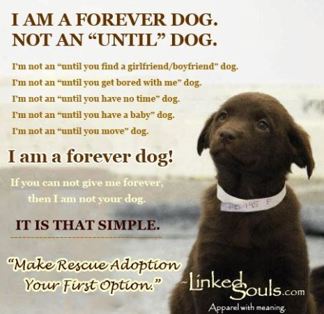 A Forever Dog Make Rescue Adoption Your First Option Canine