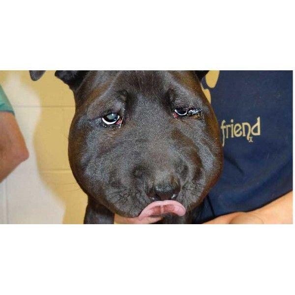 Dogs for Adoption Petfinder Dog adoption, Save a dog, Dogs