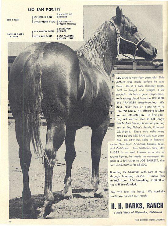 All Breed Pedigree Query Horses Quarter Horse Aqha Horses