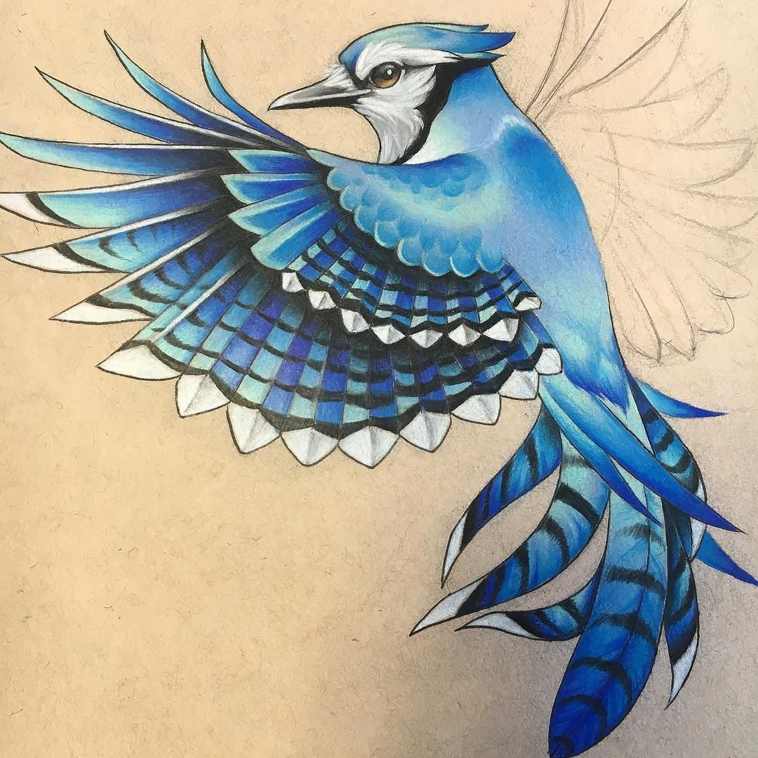 Never Posted A Good Shot Of The The Bluejay I Drew Up For My Tattoo Flying Bird Tattoo Bluebird Tattoo Black Bird Tattoo