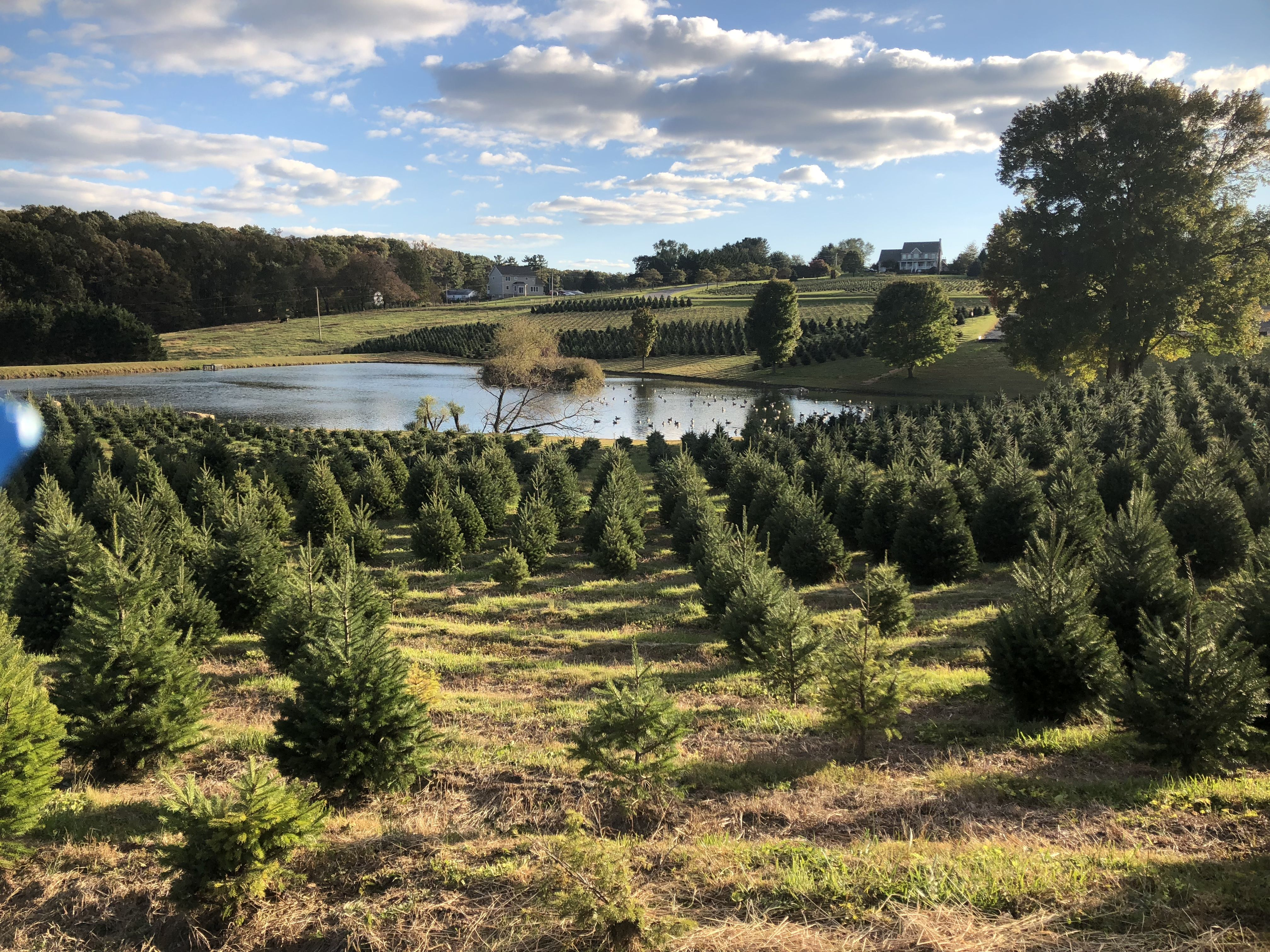 Pine Valley Farms - Gallery | Pine valley, Christmas tree ...