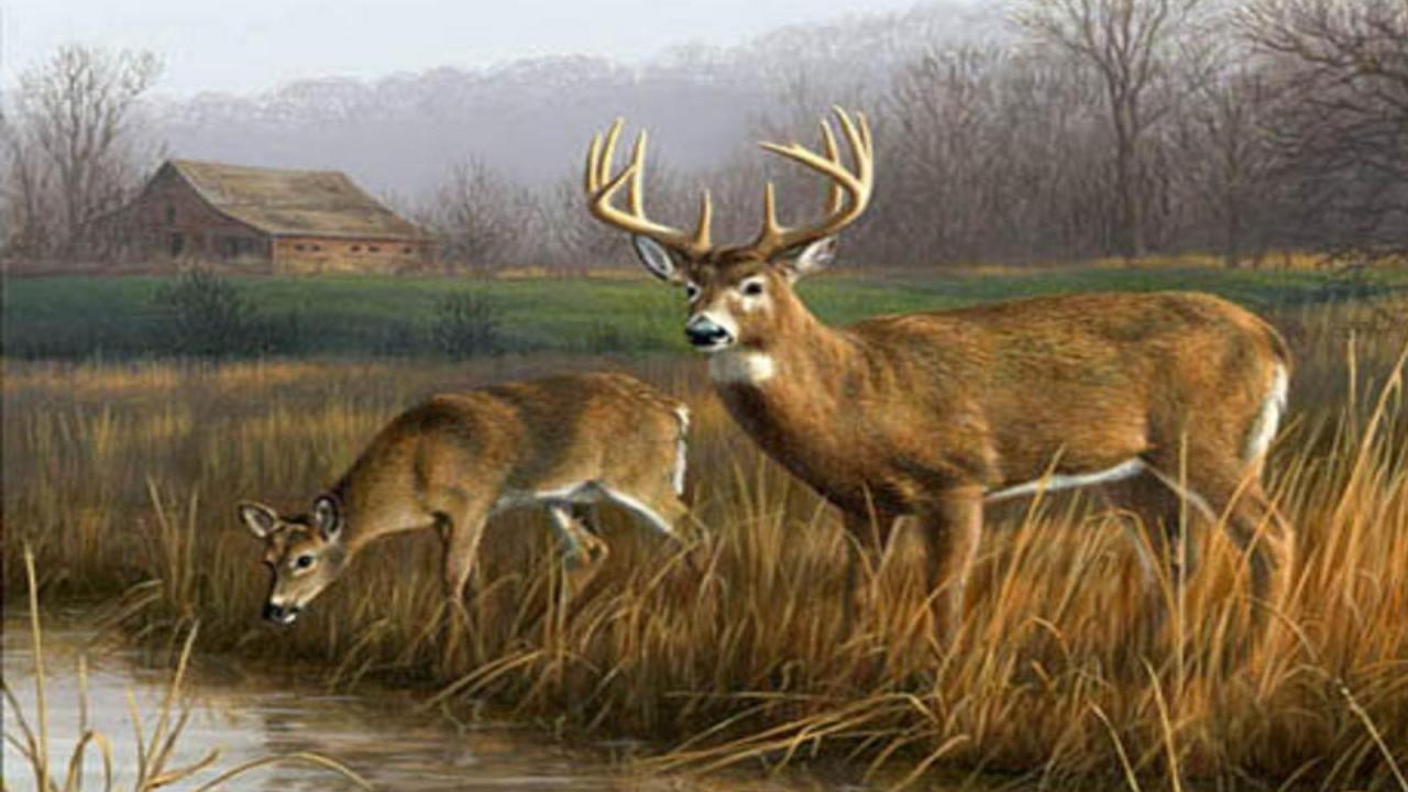 Tennessee Watchable Wildlife | White-tailed Deer (Hunted) |Wide Deer Wildlife
