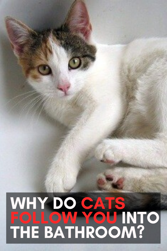 Why Do Cats Follow You Into The Bathroom In 2020 Cat Love Quotes Cats Funny Cute Cats