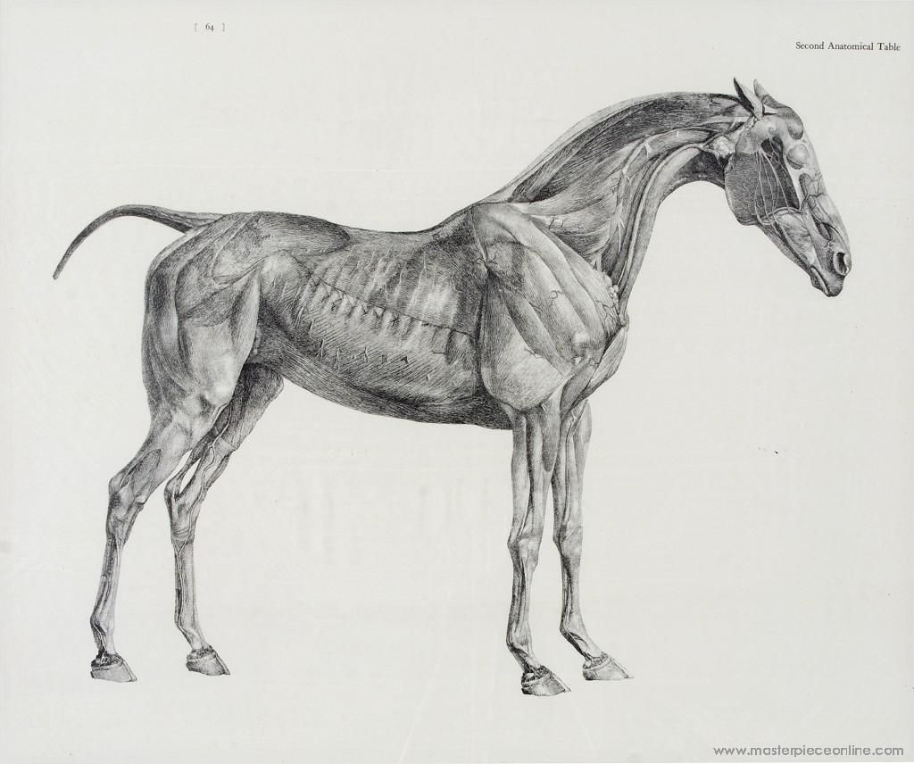 George Stubbs study of a horse | Equine Health -- Horse Health ...
