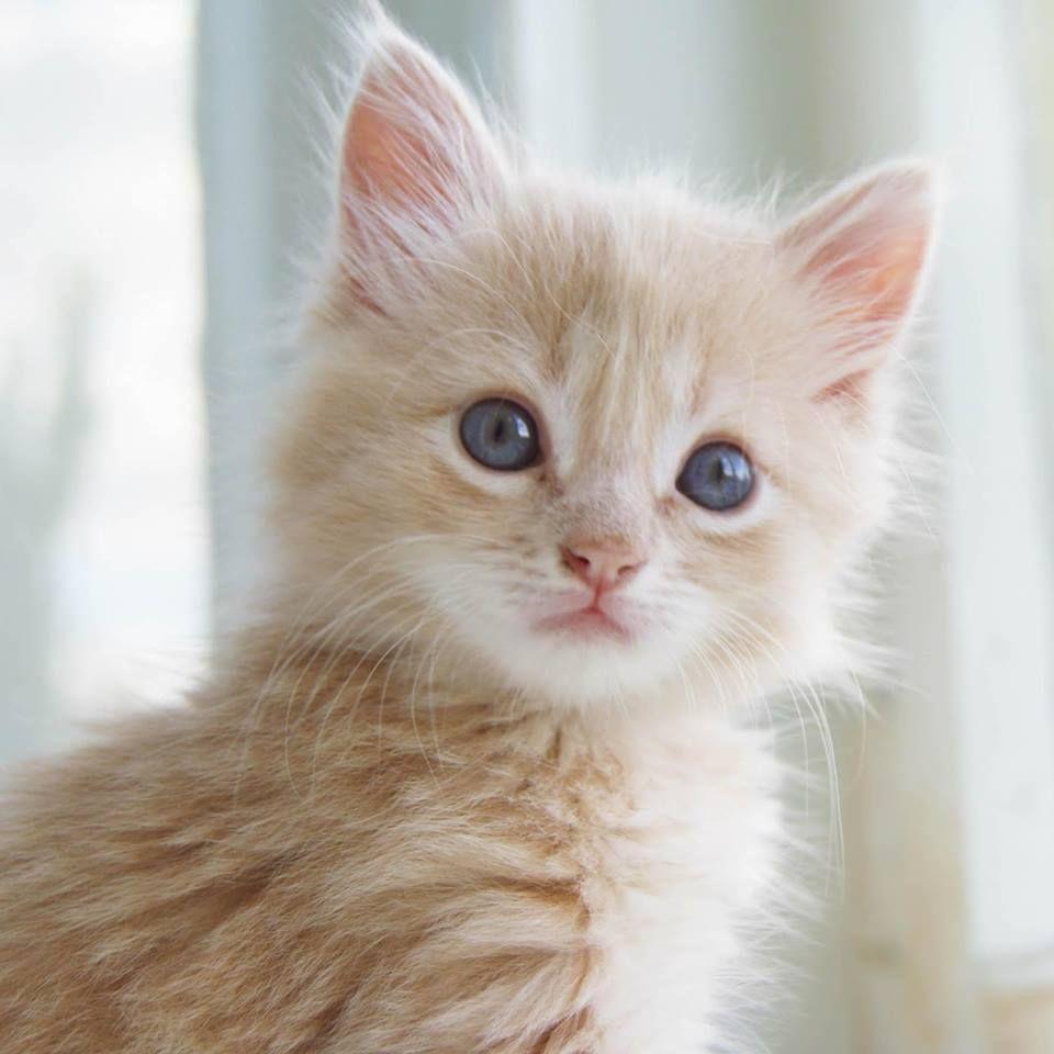 Happy Caturday Bon Samedi Des Amours De Toutous Kittens Cutest Cats Pretty Cats