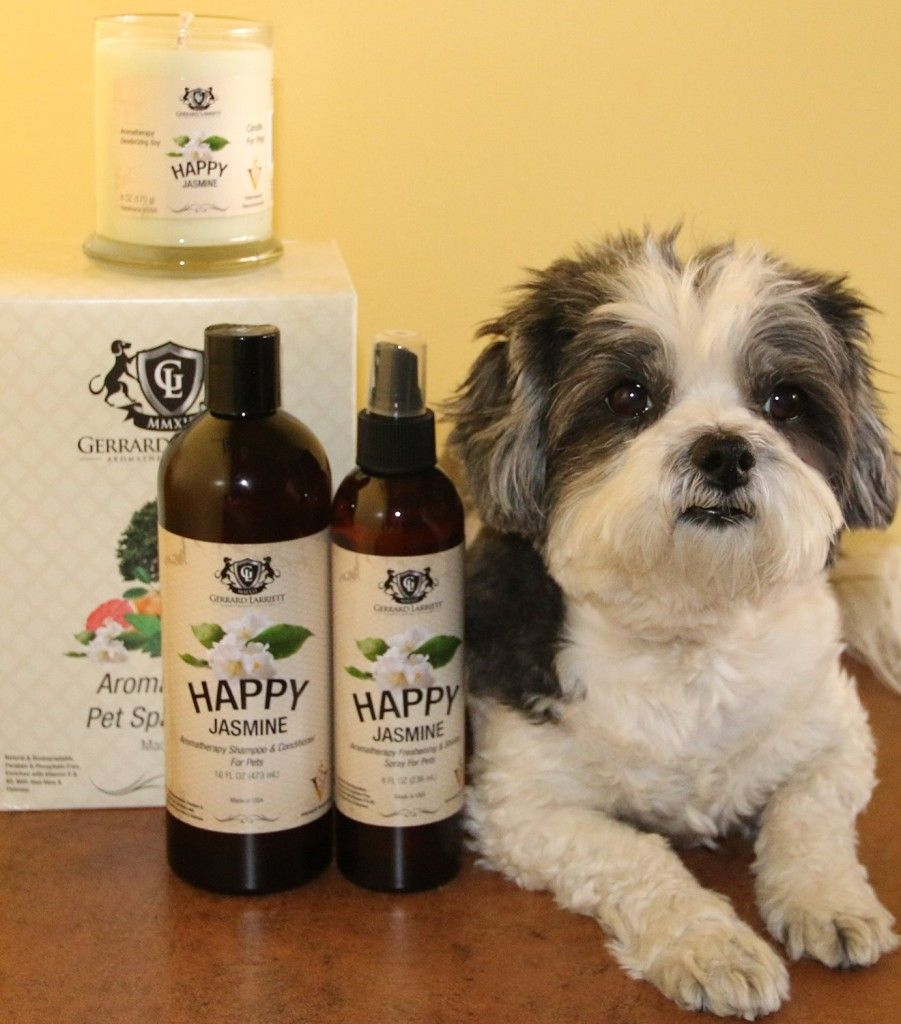 Top 10 Best Dog Shampoo in 2015 reviews Dog shampoo