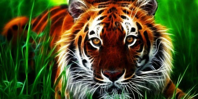 Hd Animated Wallpapers For Mobile Free Download Tiger Wallpaper Tiger Pictures Tiger Images