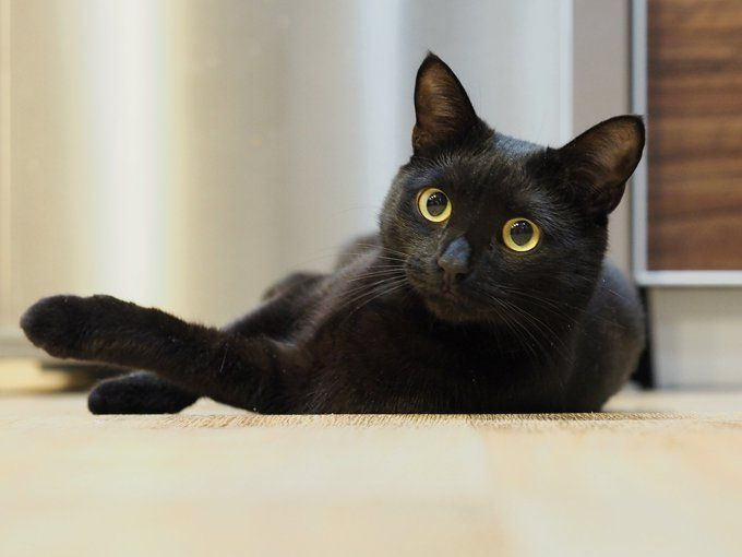 Black Cat Appreciation Day 30 Beautiful Black Kitties To Celebrate Pictures Cattime Black Cat Appreciation Day Cats And Kittens Cats