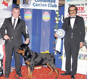 #Rottweiler Quin is CCC Pup of the Year - read more at: http://www.dogworld.co.uk/product.php/90451