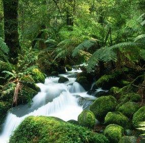 Tropical Rainforest Wallpaper Hd Nature Amazon Rainforest