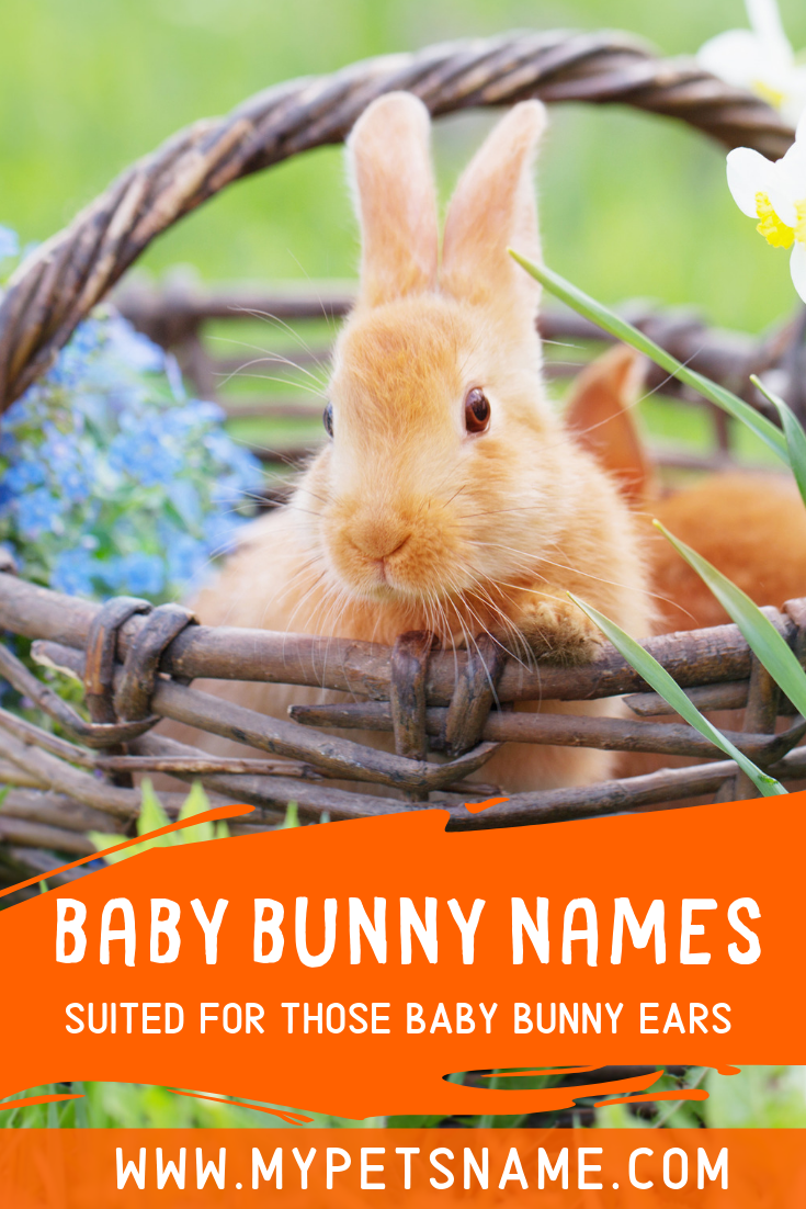 With A Sweet And Playful Temperament Bunnies Make Brilliant Pets For Children And Therefore They Need A Brilli With Images Bunny Names Baby Pet Names Best Pets For Kids