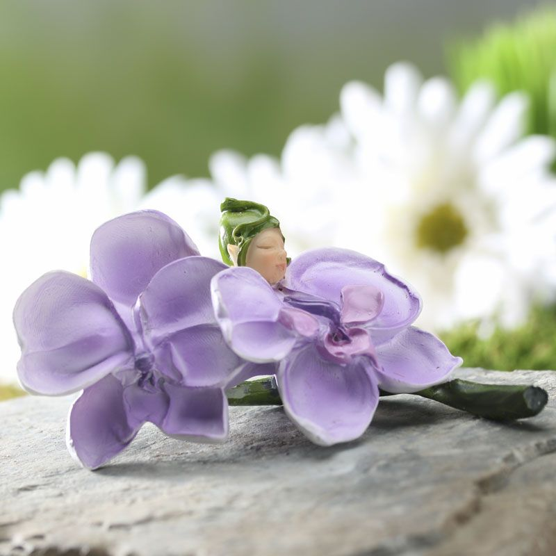 Miniature Orchid Baby Fairy