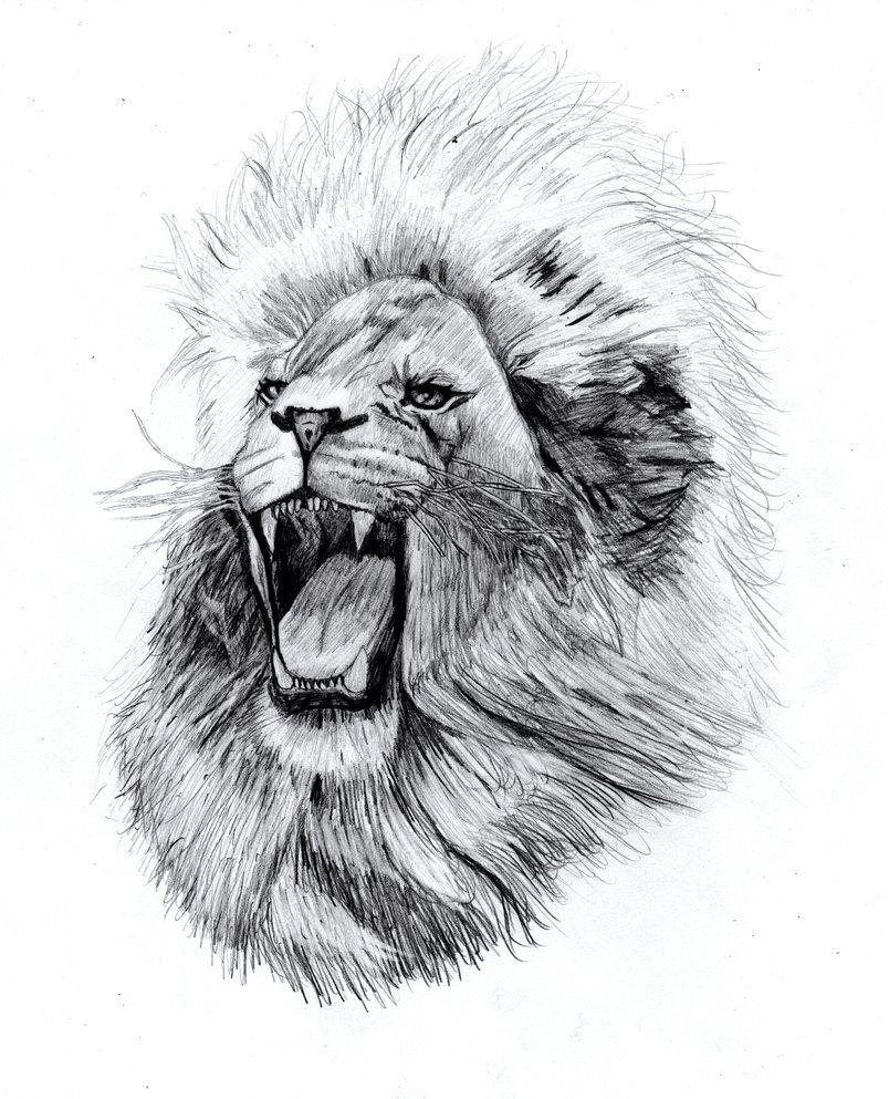 Rugido de um leão por OscarChavez no deviantART